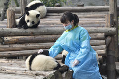Panda and Young Girl in China Royalty Free Stock Photos