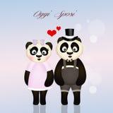 Pandaechtgenoten Stock Afbeeldingen