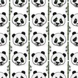 Pandahuvud med den sömlösa modellen för bamburemsor Dragen illustration för vektor som hand isoleras på vit royaltyfri bild