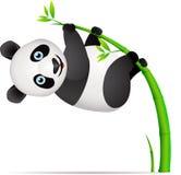Pandakarikatur Lizenzfreies Stockfoto