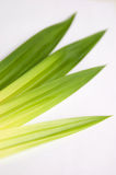 Pandan Stock Photos