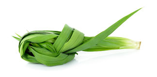 Pandan leaf  on the white background Stock Image