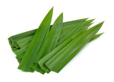 Pandan leaf on white background Stock Images