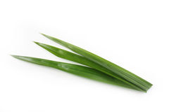 Pandan leaves Stock Images
