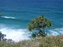 Pandanas Tree against the ocean Stradbroke Island Stock Images