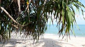 Pandanus über dem Kao Plydum-Strand in Thailand lizenzfreie stockbilder