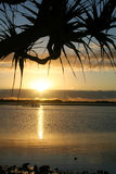 Pandanus Against The Sun Stock Photo