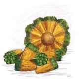 Pandanus fruit core with kernels Royalty Free Stock Photo