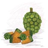 Pandanus fruit kernels Stock Image