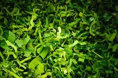 Pandanus leaf split texture Stock Photo