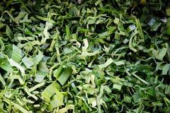 Pandanus leaf split texture Stock Photography