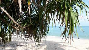 Pandanus over the Kao Plydum beach in Thailand. Pandanus over the Kao Plydum beach in Nakhon Si Thammarat ,South of Thailand Royalty Free Stock Images