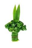 Pandanus-Palmblätter sind gefaltete Rosen Lizenzfreies Stockfoto