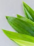 Ταϊλανδικό βοτανικού φύλλων pandanus SPA συστατικών γλυκού και χωματένιου άρωμα, Στοκ Εικόνες