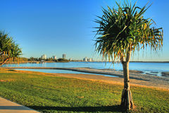 Pandanus Tree Stock Photo