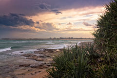 Pandanus Trees In The Sunset Stock Images