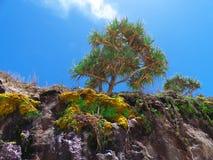 Pandanuspalmträd på en klippa Royaltyfria Foton