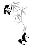Pandas στον κλάδο μπαμπού Στοκ Εικόνα