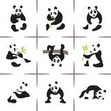 pandas Royaltyfri Bild