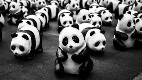pandas Imagen de archivo libre de regalías
