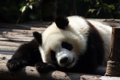 Pandas bed Stock Photo