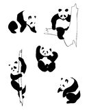 Pandas in different positions. On a white background Royalty Free Stock Image