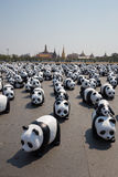 1600 pandas em Tailândia Imagens de Stock Royalty Free