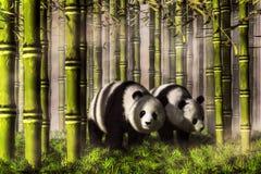 Pandas en un bosque de bambú libre illustration