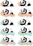 Pandas with flowers Stock Image