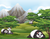 Pandas in forest Stock Photos