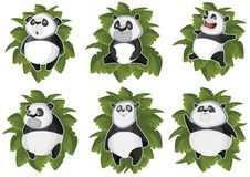 Pandas isolated in the leaves Royalty Free Stock Photo