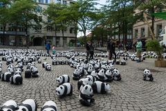 Pandas in Kiel Stockbild