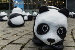 Pandas in Kiel Stockbilder