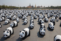 1600 Pandas in Thailand Royalty Free Stock Photo