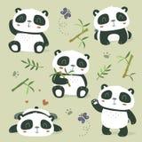 Pandasatz Stockfoto