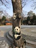 Pandaträd royaltyfria bilder