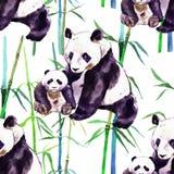 Pandavattenfärg Pandabjörnen och behandla som ett barn björnen Royaltyfri Fotografi