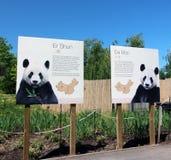 Pandor i den Toronto zoo Arkivfoto