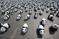 1600 pandor i Thailand Arkivfoto
