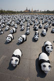1600 pandor i Thailand Fotografering för Bildbyråer