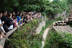 Pandor med besökare Arkivfoto