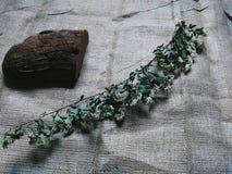 Pane di Borodino e ramoscello asciutto Fotografia Stock