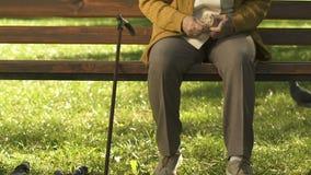 Pane di lancio della donna senior ai piccioni in parco, uccelli d'alimentazione, pensione di tempo libero video d archivio
