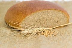 Pane di segale del grano, punta del grano e manciata di grani del grano Fotografie Stock