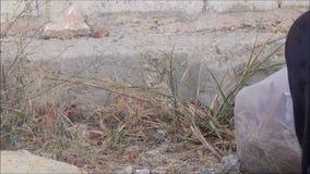 Pane palestinese 6 di cottura della donna stock footage