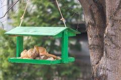 Pane per gli uccelli selvaggi nell'alimentatore fotografia stock