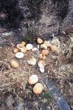 Pane sprecato al cimitero fotografia stock libera da diritti