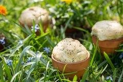 Pane in vaso da fiori Immagini Stock