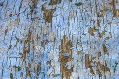 Panel de fibras de madera azul marino del primer con la peladura de la pintura Textura de la superficie ?spera fotografía de archivo libre de regalías