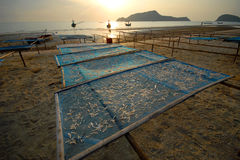 Panel dry fish on the beach. Royalty Free Stock Photography